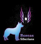 Siberian Husky Logo - Entry #72