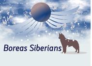 Siberian Husky Logo - Entry #100