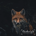 Rachael Jo Photography Logo - Entry #100