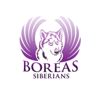 Siberian Husky Logo - Entry #15