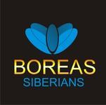 Siberian Husky Logo - Entry #103