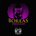Siberian Husky Logo - Entry #21