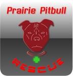Prairie Pitbull Rescue - We Need a New Logo - Entry #29